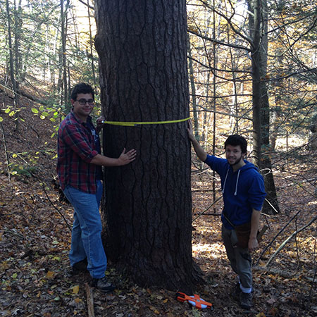 Measuring Trees