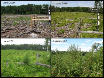 Clearcut regeneration over time. Photo by Chris Williams.