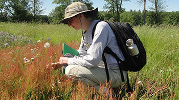 [Alina determining abundance of sheep's sorrel in an observational plot. Photo by Jill Fusco]