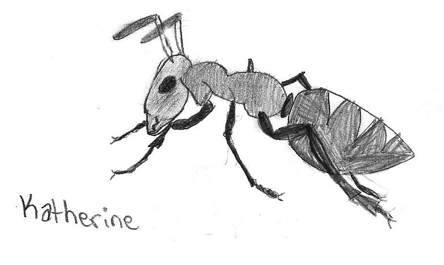 Ant by Katherine