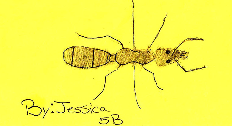 Ant by Jess