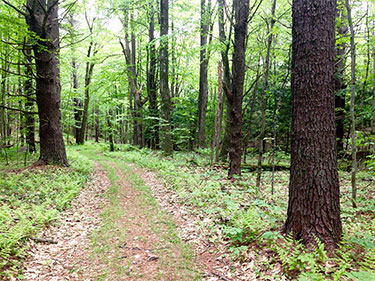 [Trails around Harvard Forest. Photo by Caitlin Keady]