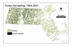 Forest Harvesting Map