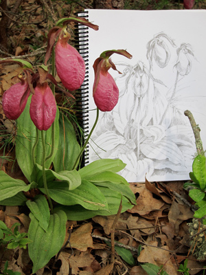 Lady Slipper Martha's Vineyard Kaspari