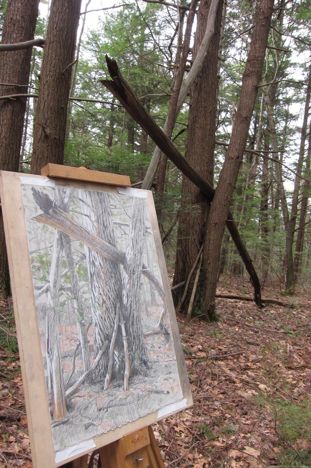Harvard Forest: Site 1: HF Hemlock Grove With Chestnut Skeletons