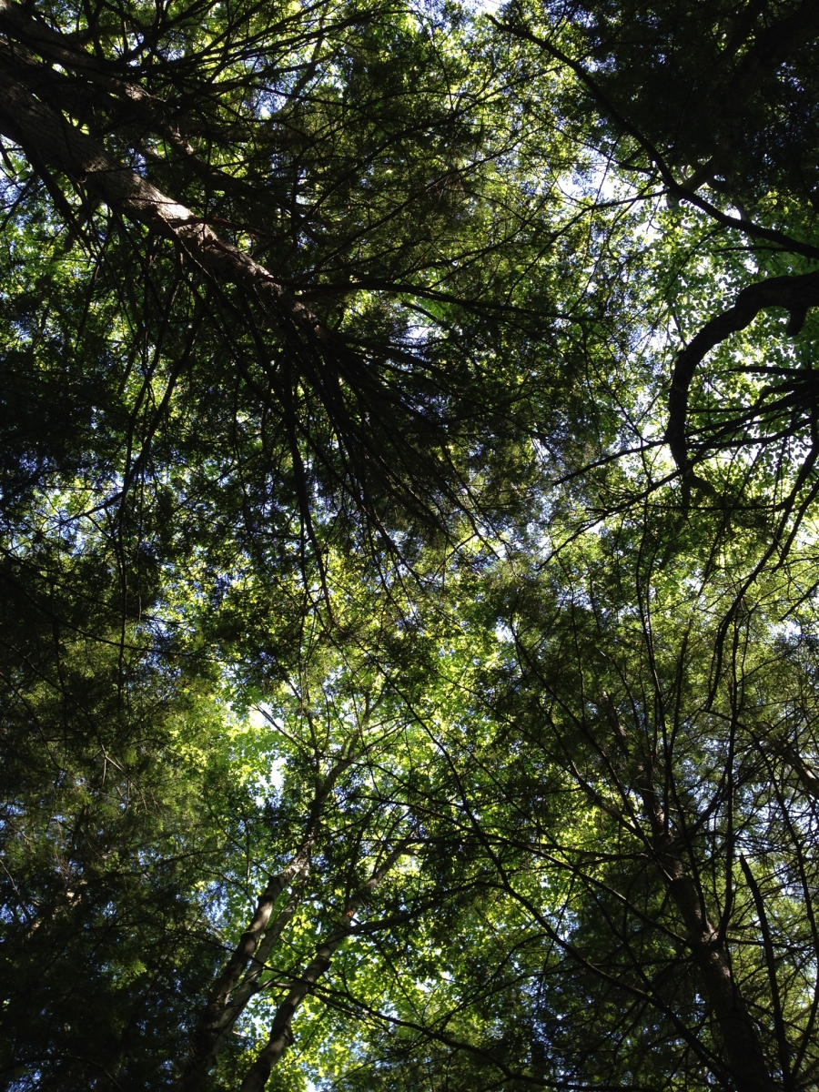 Harvard Forest: How Do I Love Thee, Soil? Let Me Count Thy Roots