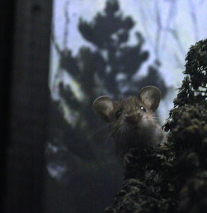 Mouse in the Diorama 2011