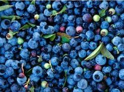 Blueberries high concentration of anthocyanins