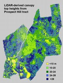 Prospect Hill Canopy Height Map