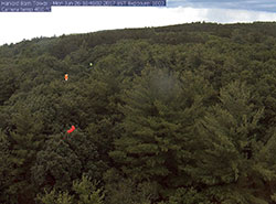 [Party balloons in tree canopy used to identify individual trees. Photo by PhenoCam Network]