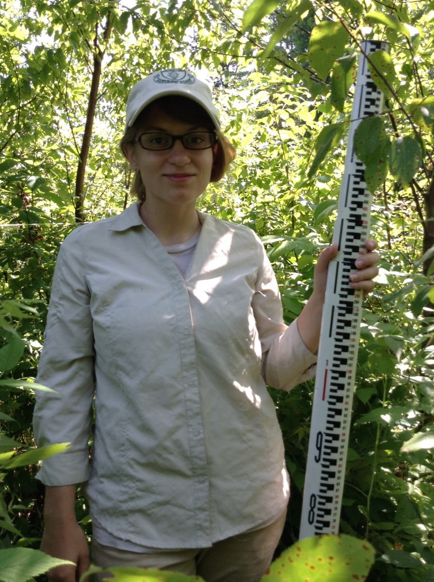 [REU student Alayna Johnson, holding a stadia rod, which is used to measure trees, in order to understand how productive the regenerating forest at a research site is]