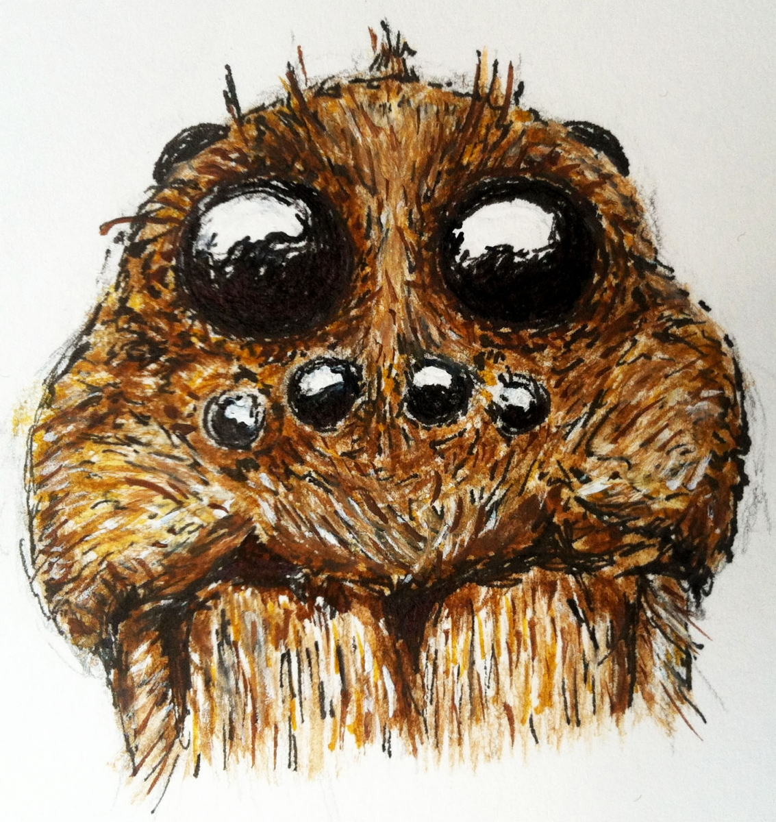 [A drawing in ink of the face of a wolf spider; drawing by Heather Clendenin.]
