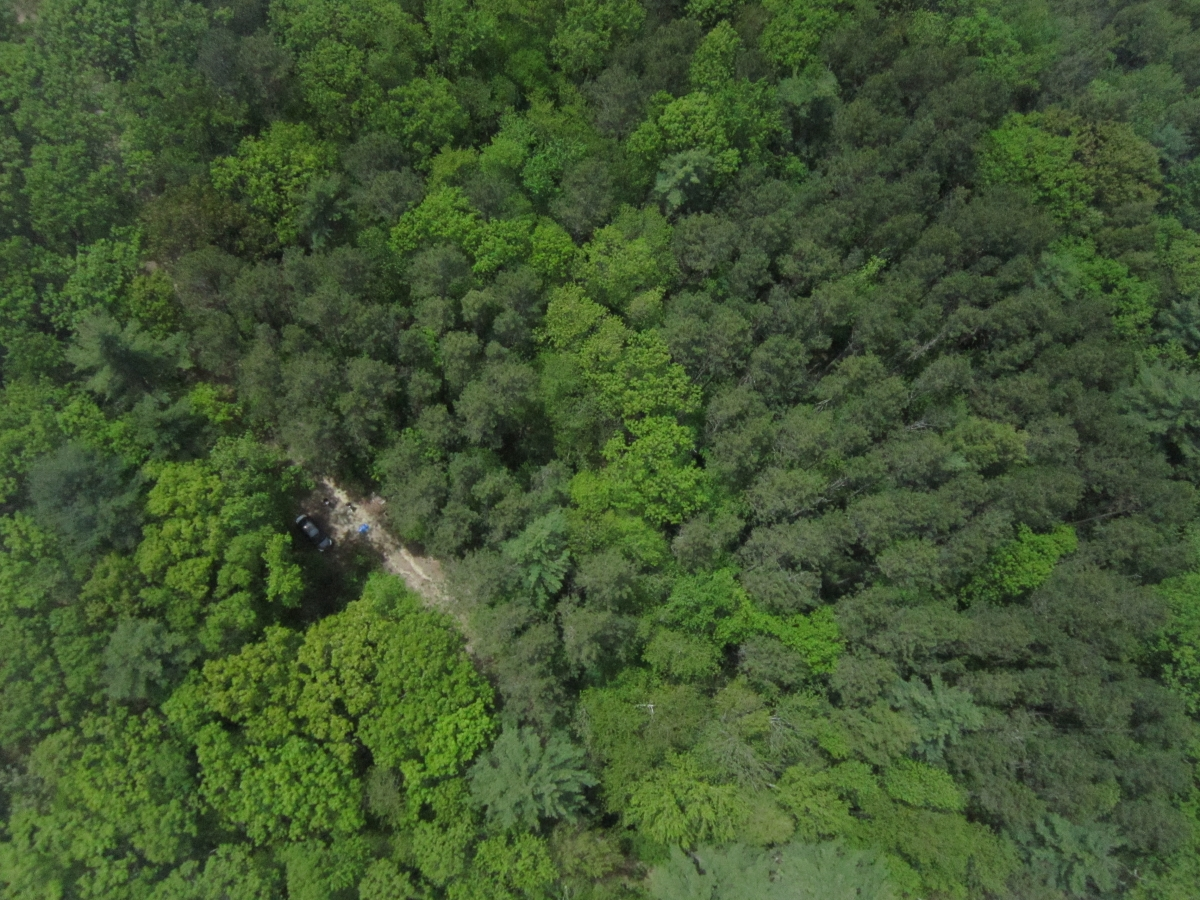 [Picture of the launch site taken by the drone just as it makes it through the trees to fly over the canopy]