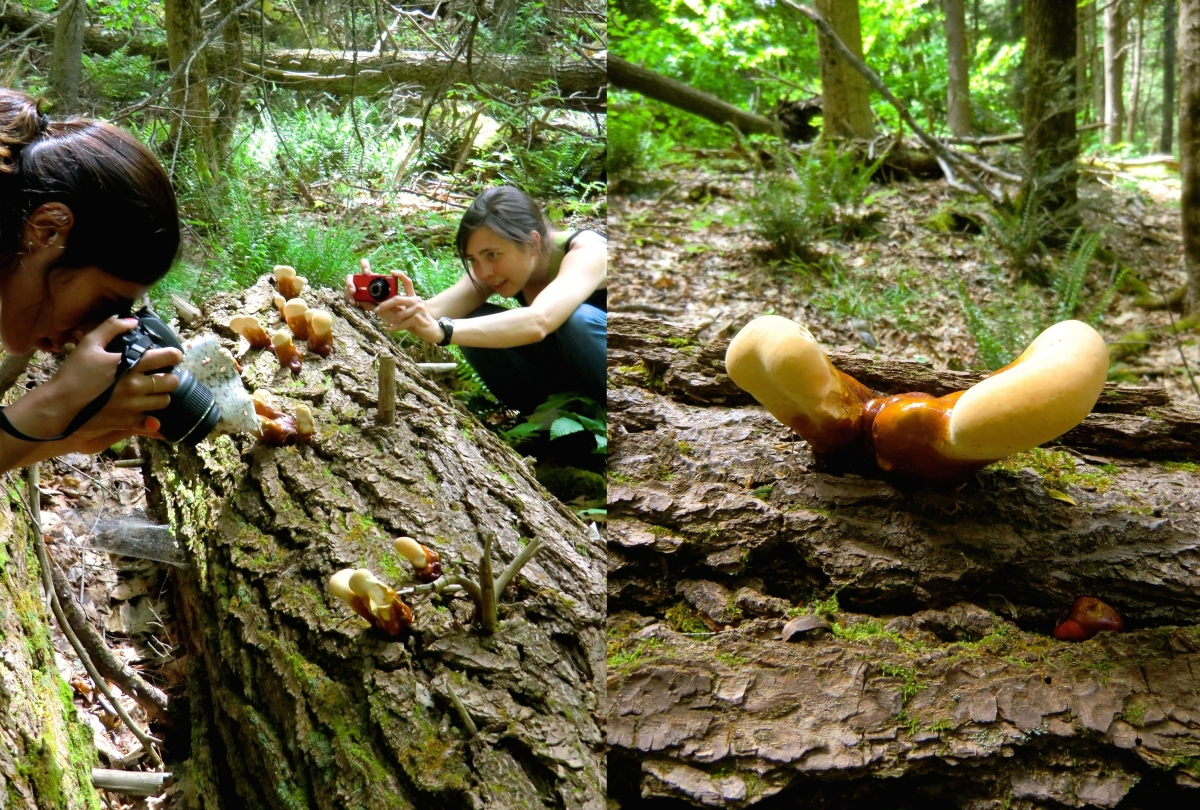 [During a leisurely weekend hike up the nearby Mount Toby, we all stopped to admire weird mushrooms growing on a fallen log. Grace and Jessica got close-up shots.]