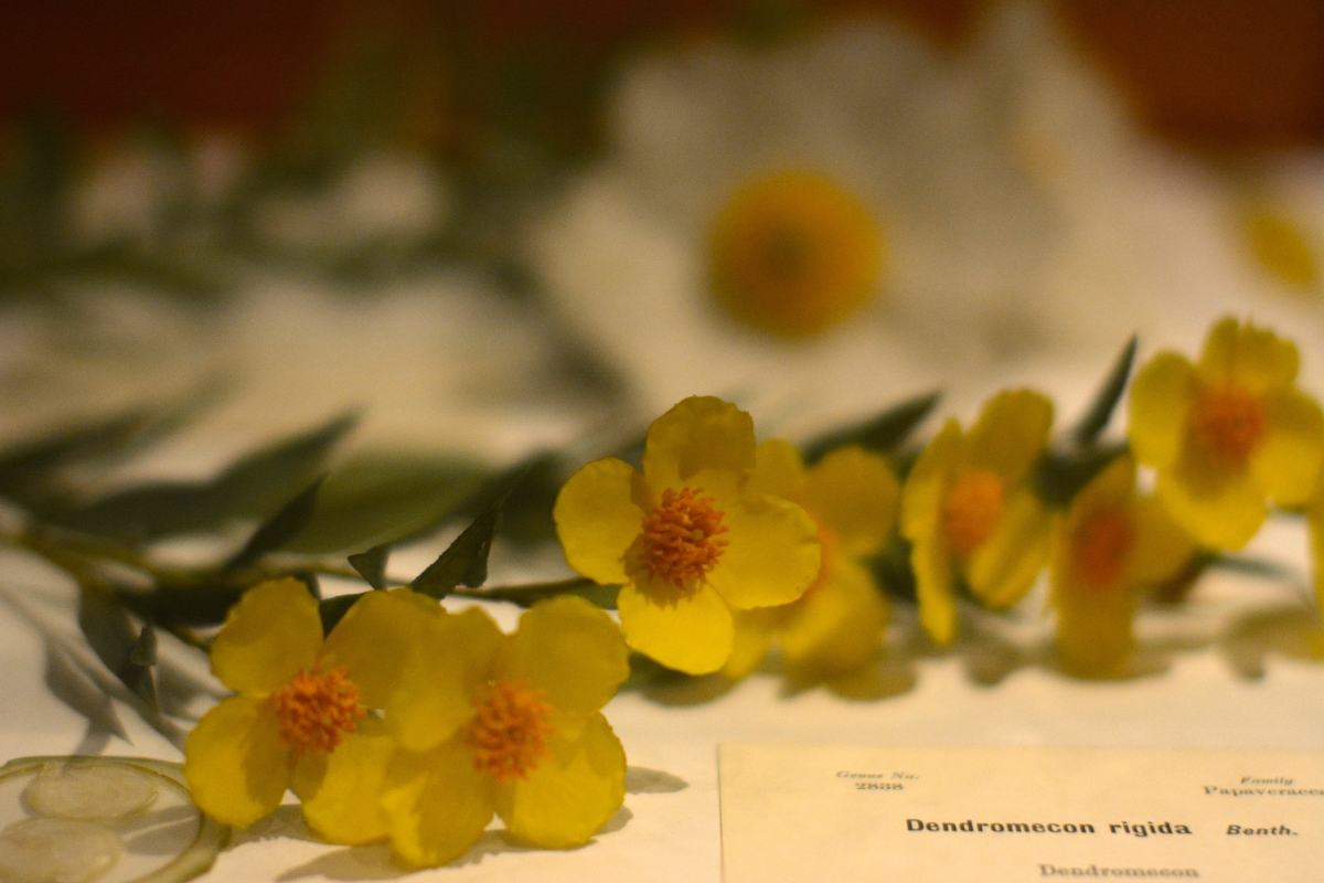[Glass flowers at the Harvard Museum of Natural History. Photograph courtesy of Alayna Johnson.]