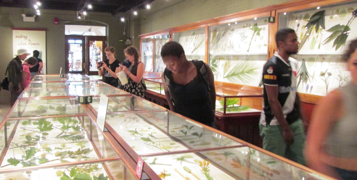 [Students admiring the glass flowers exhibit at the Harvard Museum of Natural History.]