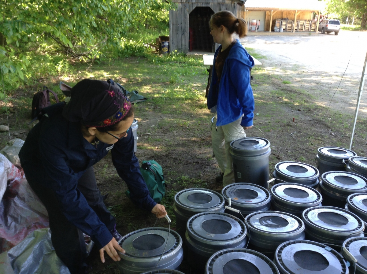 [Laura and Audrey moving the buckets containing soil and microbes that will become our mesocosms.]