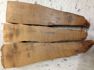 Hawley tree rings