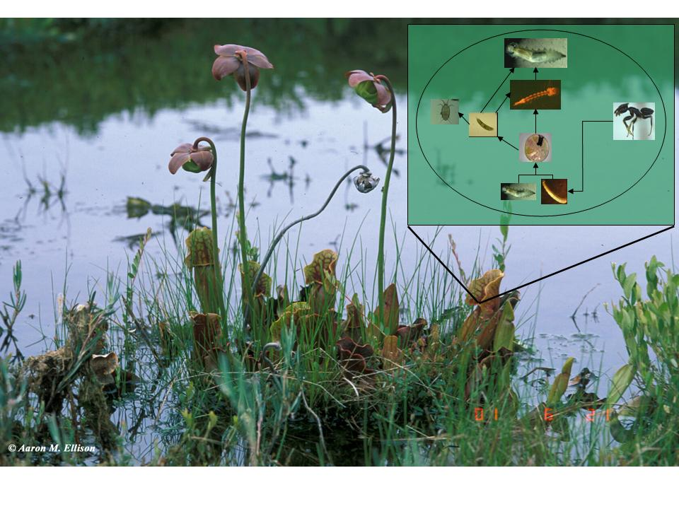 Press Resources: An Inside Look at Pitcher Plants 4/1/13 ...
