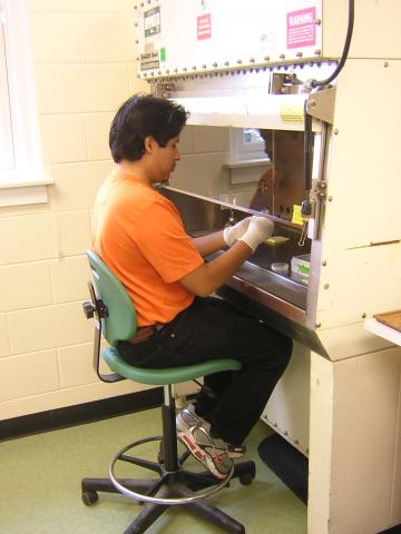 Summer Research Program Microbial Analysis Research