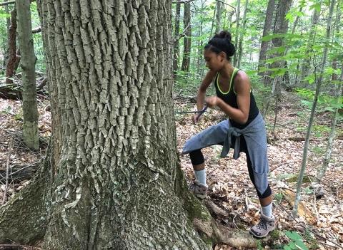 Tree Coring