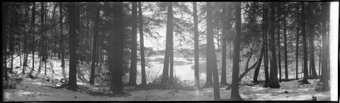 Forest and Harvard Pond