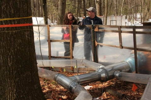 "Forest Ecologist and Harvard Student Discuss ""Warm Ants"" Experiment"