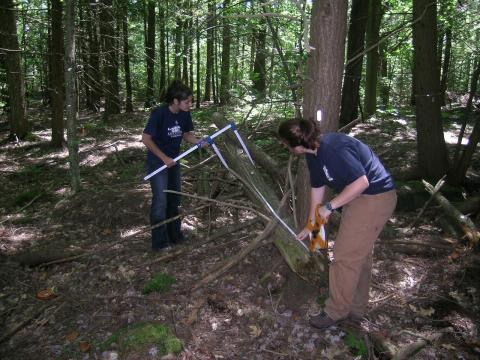 REU students sample coarse woody debris