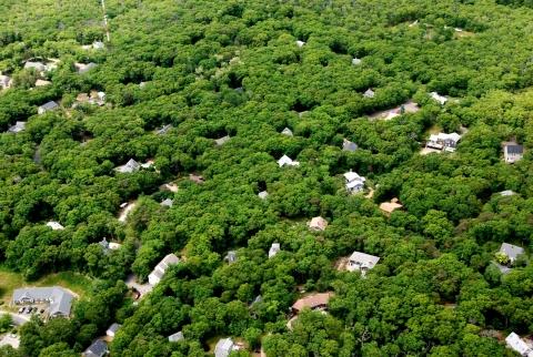 Aerial View Of Martha's Vineyard Show Forest Decline