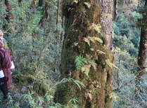 Measuring Trees in Bhutan