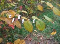 Buds, Leaves & Global Warming