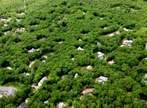 Aerial View Of Martha's Vineyard Show Forest Decline