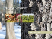 Harvard Forest Biennial Report 2013