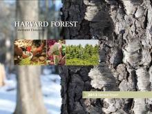 Harvard Forest Biennial Report 2013