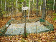 Harvard Forest DIRT plot