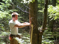 Kyle Gay measuring tree diameter