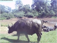 A representative photo from Kenya of a water buffalo at a watering hole.