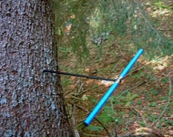 An increment borer used for tree coring.