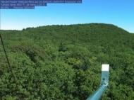 Canopy webcam