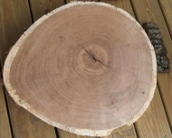 old-growth rings