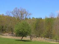 Spring May 22