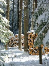 Woodpile in winter