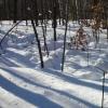 Winter Soil Warming Plots