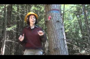 Hemlock Removal Experiment -- Clarisse Hart, Simes
