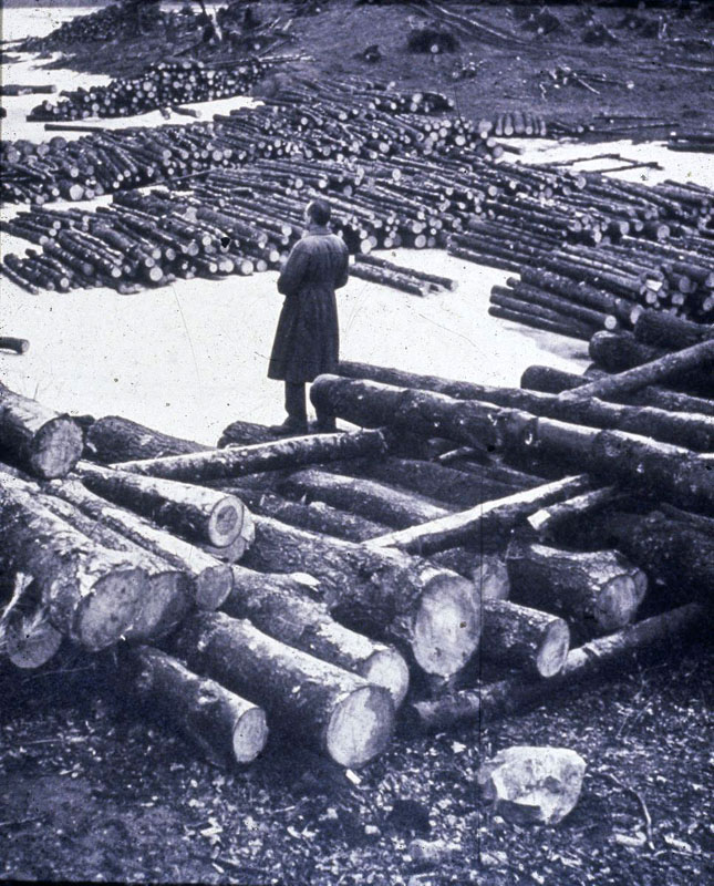 Al Cline surveying salvaged lumber at Harvard Pond